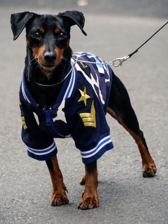 abbigliamento-cani-felpa-army-chuki-yuki