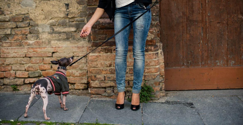 Abiti di lusso per cani